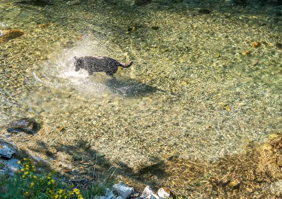 Paseos familiares con perros en la Val d'Aran